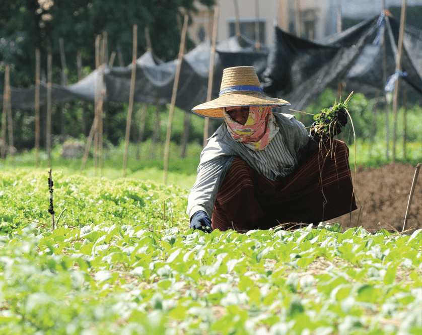 Vietnam's agriculture sector at a crossroads Oxford Business Review